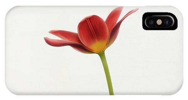 Tulip iPhone Case - Portrait Of A Tulip by Lotte Gr??nkj??r