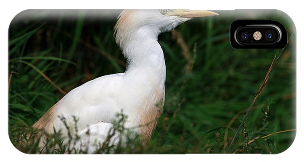 Portrait Of A White Egret IPhone Case