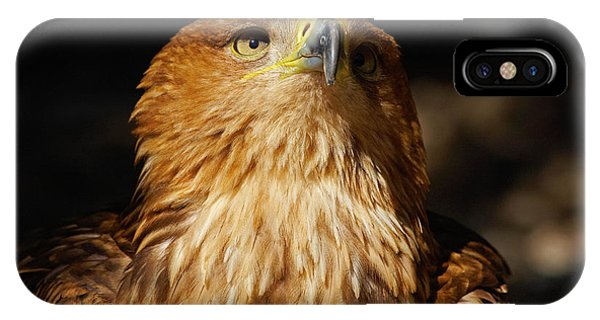 Portrait Of An Eastern Imperial Eagle IPhone Case