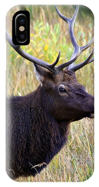 Portrait Of An Elk IPhone Case