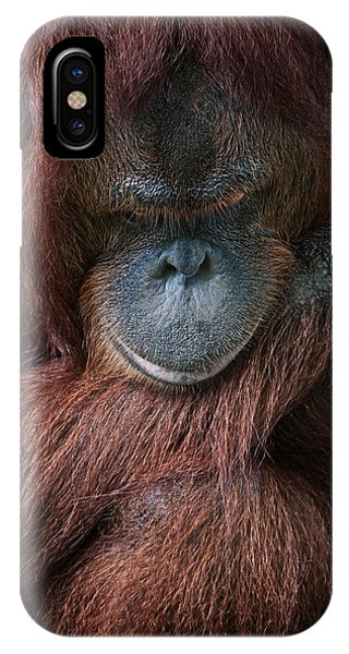 Portrait Of An Orangutan Phone Case by Zoe Ferrie