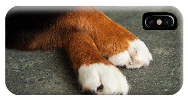 Bernese Mountain Dog iPhone Case - Portrait Of Bernese Mountain Dog Paws by Animal Images