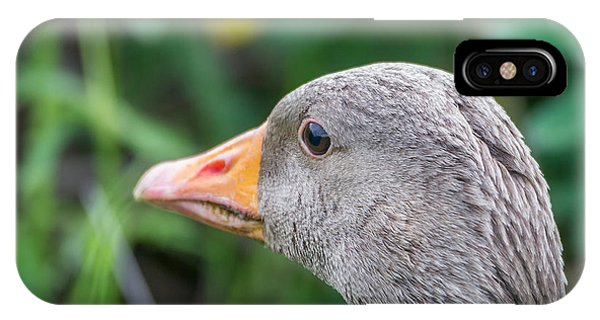 Goslings iPhone Case - Portrait Of Greylag Goose, Iceland by Panoramic Images