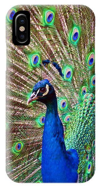 Portrait Peacock IPhone Case