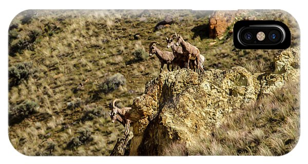 Rocky Mountain Bighorn Sheep iPhone Case - Posing Bighorn Sheep by Robert Bales