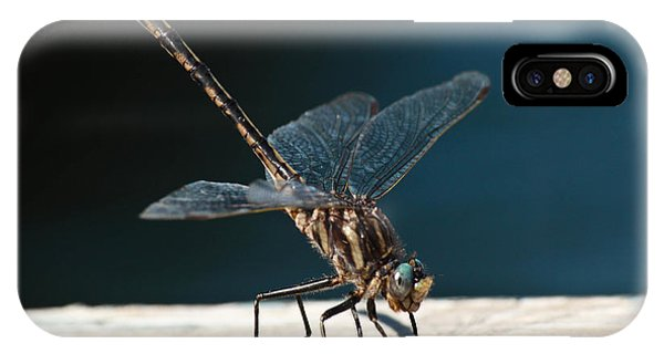 Posing Dragonfly IPhone Case