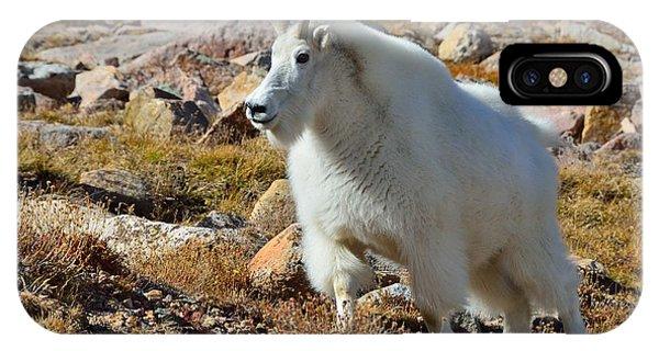 Posing Mountain Goat IPhone Case