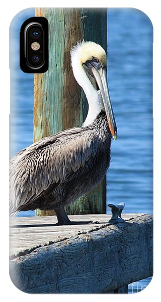Pelican iPhone Case - Posing Pelican by Carol Groenen