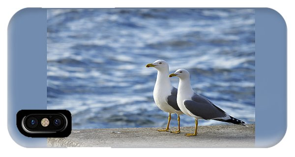 Posing Seagulls IPhone Case