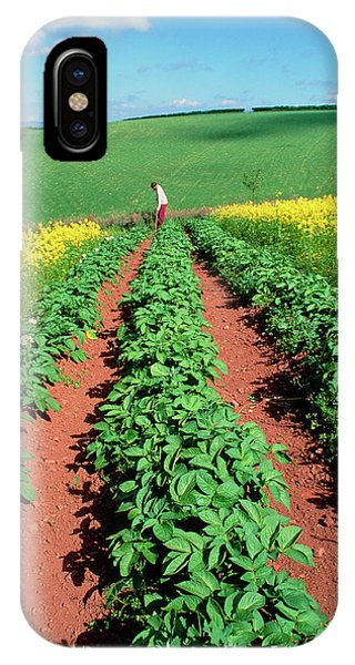 Potato Plants Flanked By Mustard On Organic Farm Phone Case by Martin Bond/science Photo Library