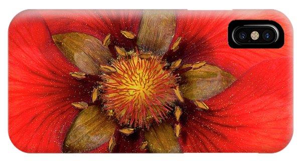 Scarlet iPhone Case - Potentilla by Nigel Downer