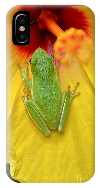 Powdered Frog  IPhone Case