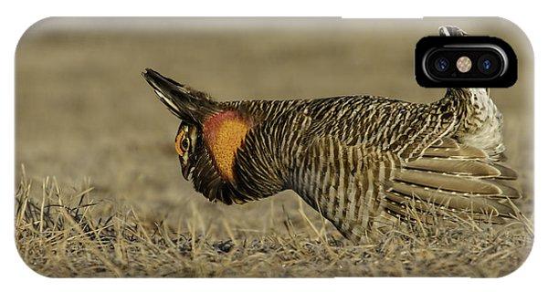 Prairie Chicken-9 IPhone Case