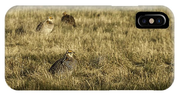 Prairie Chickens After The Boom IPhone Case