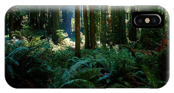Prairie Creek Redwoods State Park 10 IPhone Case