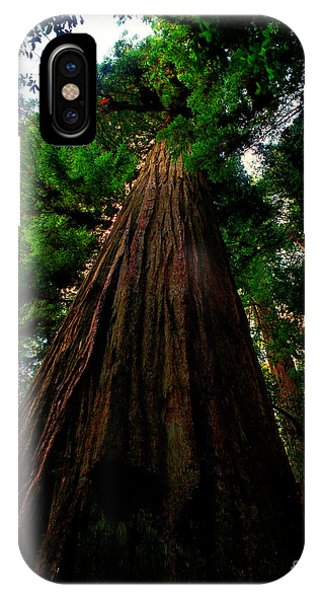 Prairie Creek Redwoods State Park 13 IPhone Case