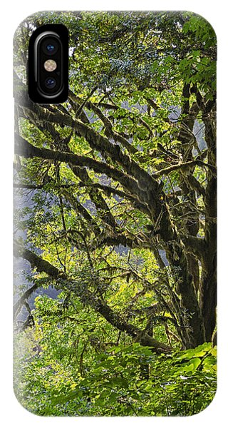 IPhone Case featuring the photograph Prairie Creek State Park by Jon Exley