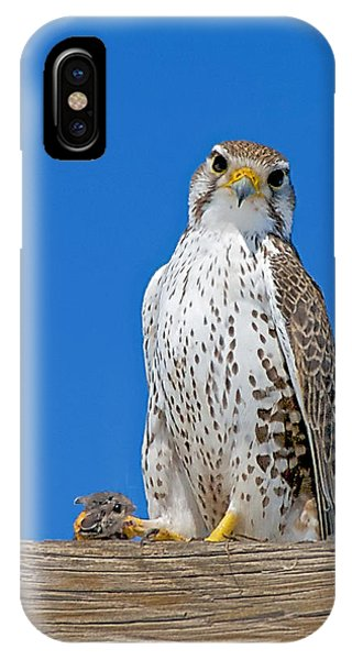 Prairie Falcon With Mouse IPhone Case