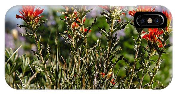 Scarlet Paintbrush iPhone Case - Prairie Fire by Robert Bales