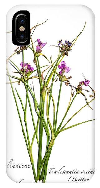 Prairie Spiderwort IPhone Case