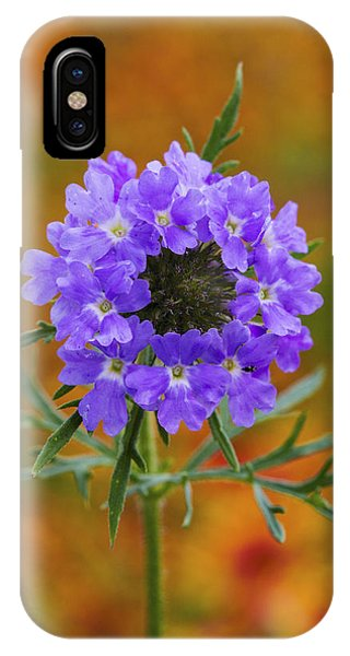 Prairie Verbena In A Firewheel Colony IPhone Case