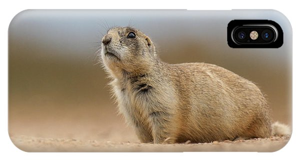 Prarie Dog  IPhone Case