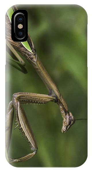 Praying Mantis 002 IPhone Case