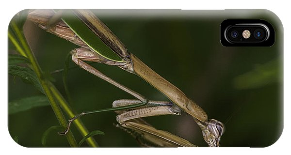 Praying Mantis 003 IPhone Case