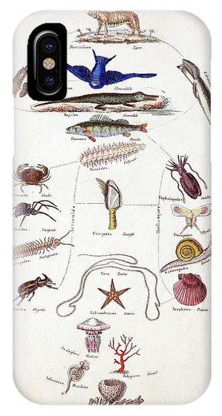Squid iPhone Case - Pre-darwinian Taxonomy Confusion by Paul D Stewart