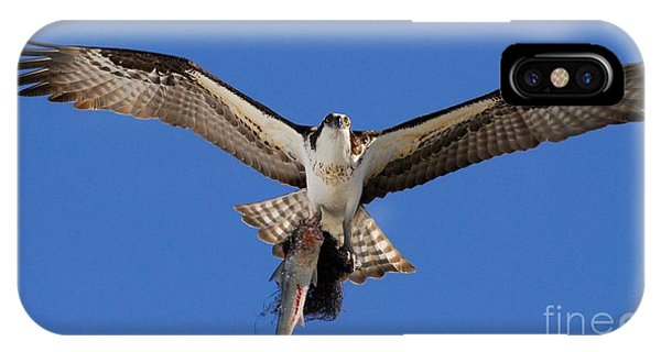 Ospreys iPhone Case - Precious Cargo by Quinn Sedam