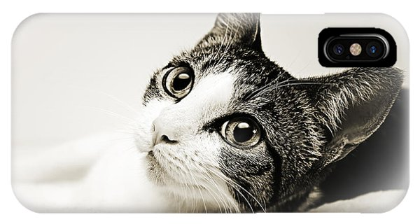 Precious Kitty IPhone Case