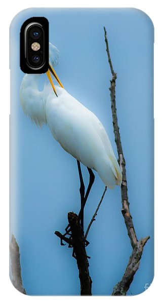 Preening Egret IPhone Case