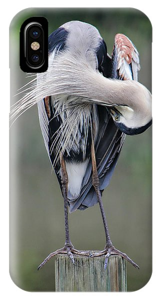 Preening Heron IPhone Case