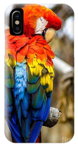 Preening Scarlet Macaw IPhone Case