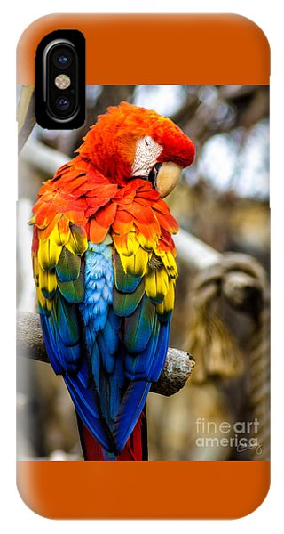 Preening Scarlet Macaw IPhone Case