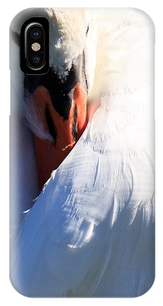 Preening Swan IPhone Case