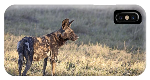 Pregnant African Wild Dog IPhone Case