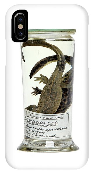 Newts iPhone Case - Preserved Newts by Gregory Davies