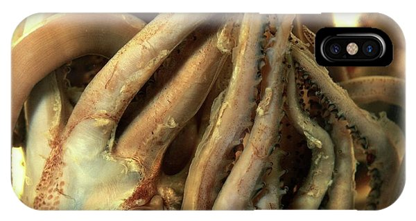 Squid iPhone Case - Preserved Squid by Natural History Museum, London/science Photo Library