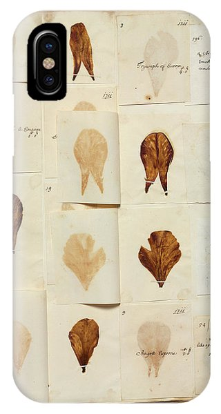 Monocotyledon iPhone Case - Pressed Tulip Specimens by Natural History Museum, London