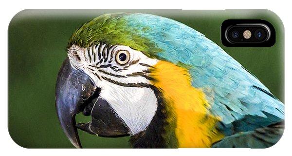 Macaw iPhone Case - Pretty Boy by Caitlyn  Grasso
