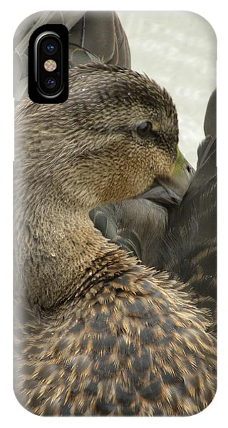 Pretty Duck IPhone Case