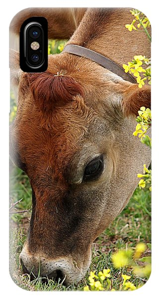 Pretty Jersey Cow Square IPhone Case