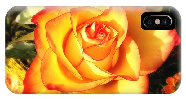 Orange iPhone Case - Pretty Orange Rose by Matthias Hauser