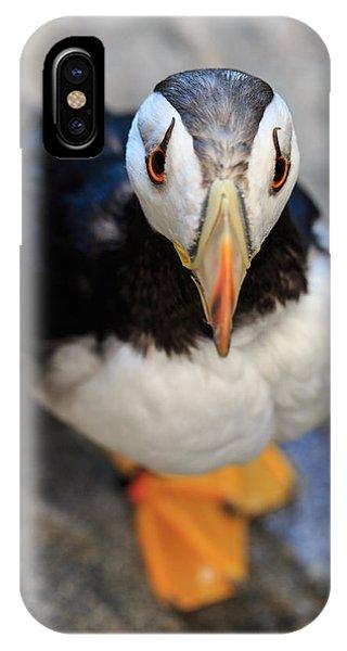Pretty Puffin IPhone Case