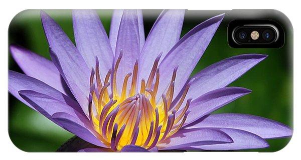Pretty Purple Petals IPhone Case
