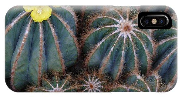 Prickly Beauties IPhone Case