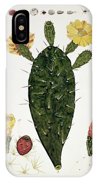 Prickly Pear Cacti Phone Case by Natural History Museum, London/science Photo Library