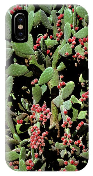 Prickly Pear Cactus Phone Case by Dr Jeremy Burgess/science Photo Library