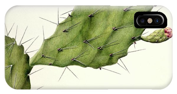 Prickly Pear (opunita Fiscus-indica) Phone Case by Natural History Museum, London/science Photo Library